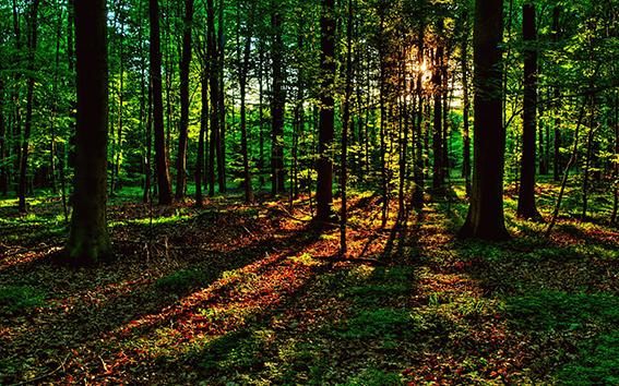 Определён порядок защиты  лесов от вредителей