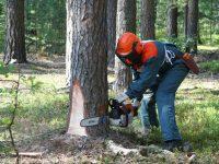 23 работника лесной отрасли получают досрочную пенсию
