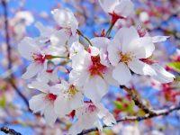 С Днём Весны иТруда – с Первомаем!
