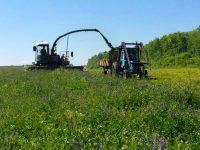 В хозяйствах района идет заготовка кормов