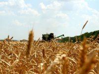 Идет уборка озимых зерновых