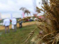 Два хозяйства муниципалитета получат гранты «Агростартап»