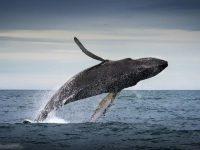 А вы против убийства китов?